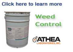 athea-weed